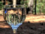 The forest in the cup I - HDR by AlejandroCastillo