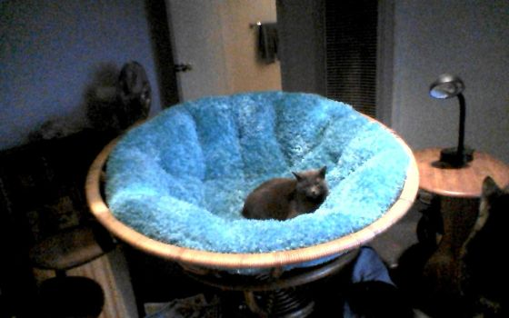 Earl in the Papasan by 2katz