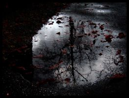 Fallen Leaves by WindowsToParadise