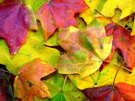 Autumn Leaves by ppdigital