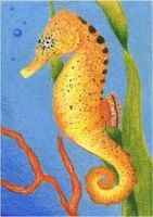 Day 15: Common Seahorse ACEO by whitetippedwaves