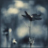 In my dreams...2 by ThierryV