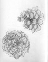 practice in shading-2 flowers by CatherineAllison
