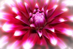 Electric Dahlia by bast4cats