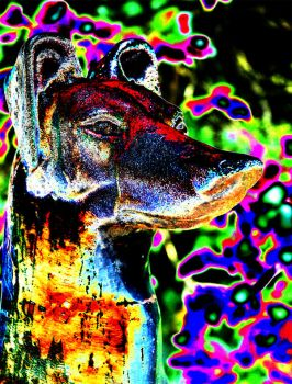 Psychedelic Doggy by psipher