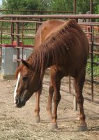 Ranch Bred AQHA Gelding 17 by escapist1901