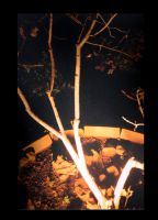 the night time tree2 by body-language