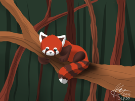 Red Panda by Marwari101
