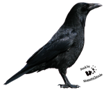 Cut-out stock PNG 06 - nice crow profile by Momotte2stocks