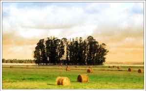 Trees and Hay by firefoxcentral