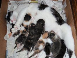 Baby Kittens at one week old by MidnightMary13