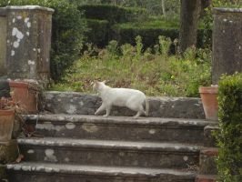 Animals - The White Cat by Stock-gallery