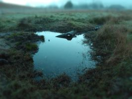 Winter Swamp 3 by GoblinStock