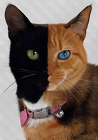 Venus - The two faced cat portrait. by Alexandoria