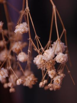 Dried Blossoms by Vaunted