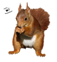 Cut-out stock PNG 112 - fluffy red squirrel by Momotte2stocks