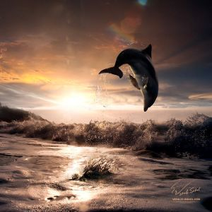 Beautiful sunset and dolphin leaping out by Vitaly-Sokol