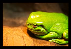 Lil Green Frog by WiDoWm4k3r
