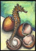 Seahorses hatch from eggs by lemurkat