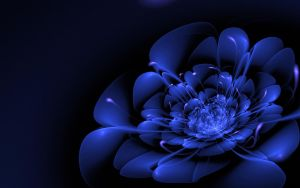 3d Bloom: Blue Midnight by raevensdemise