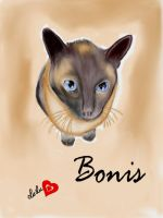 Bonis the beautiful by Sketched-Nightmares