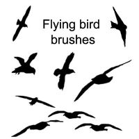 Bird Shape Brushes by little-stock