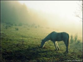 Misty morning 2 by Cycia
