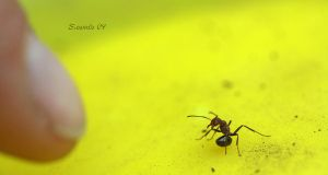 Ant Attack stance by sidneyj06