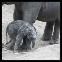 Little Elephant2 by Globaludodesign