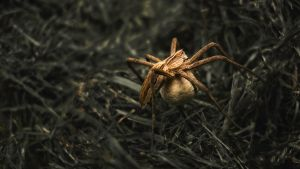 spider walkin' through the grass by Brenso