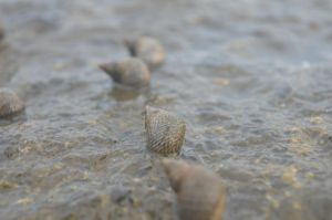 The snails by canciondemedianoche