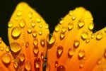 water drops 86 by yvaine2010