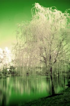 Infrared Tree And Pond by LDFranklin