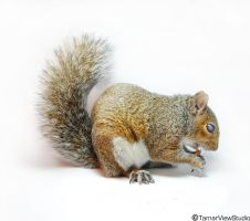 Squiggle Squirrel by TamarViewStudio