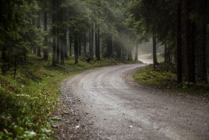 Forest road in the rain. 2 by Mark-Heather