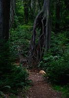 Roots by PHOTOAPHASIA