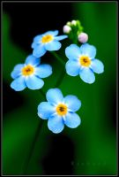 blue flower 2 by RichardRobert