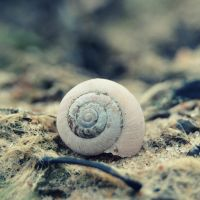 snail shell. by kipakapa