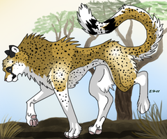 Cheetah by TussenSessan
