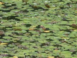 Lily pad stock 2 by Noxtu-Stock