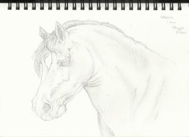 Horse Head Drawing. by mgilbertart