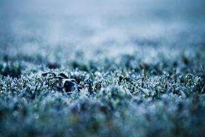 Frost by pavel89l1