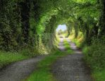 Green Tunnel by MadraRua