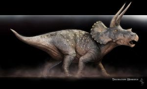 Triceratops horridus by Swordlord3d
