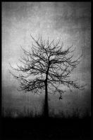 the last leaf by vajkarious