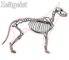 The skeleton of a dog by Spaik-The-Wolf