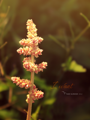 I want by tt2008