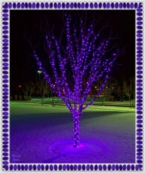 Scentsy Christmas Tree, Scentsy HQ, Meridian, ID by Randy-Robin