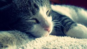 Sleeping Cat by Gbbogner