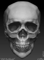Human Skull Anatomy Sculpting by BetterTheDevilUKnow
